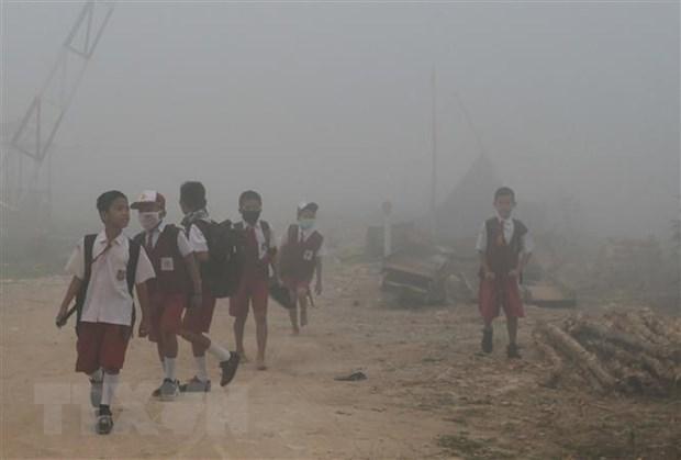 欧盟协助东盟实现泥炭地可持续利用和减少烟雾现象 hinh anh 1