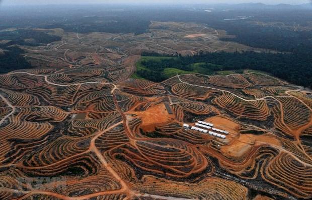 印尼新首都建设将于2021年开始 hinh anh 1