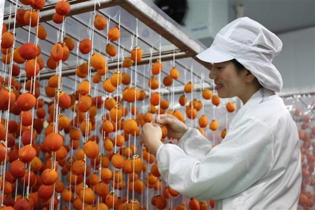 采用日本技术的柿饼生产厂正式投运 hinh anh 1