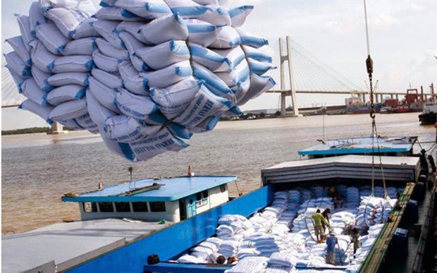 菲律宾和科特迪瓦是越南大米第一大出口市场 hinh anh 1