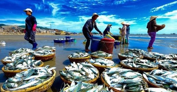 """越南争取欧洲理事会取消对本国海产的""""黄牌警告"""":困难再大也要做到 hinh anh 1"""
