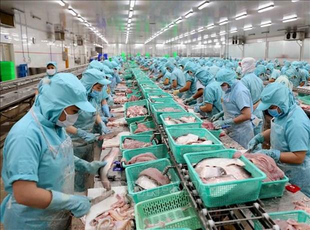 提高查鱼出口价值 有效适应世界市场 hinh anh 1