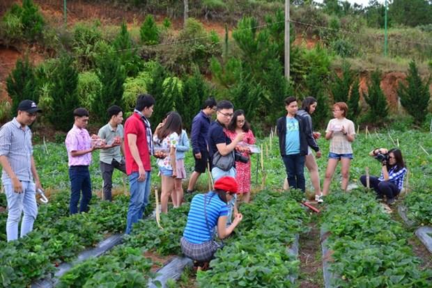 农场体验游——林同省的特色旅游产品 hinh anh 2