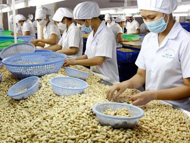 腰果仁对中国出口增长58%以上 hinh anh 1
