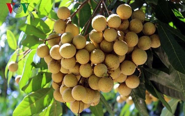 越南山萝省获商标保护认证农产品达18个 hinh anh 1