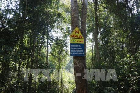 特用林和防护林是可持续发展的核心 hinh anh 2