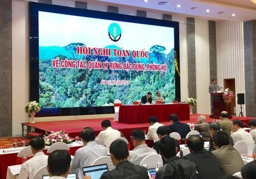 特用林和防护林是可持续发展的核心 hinh anh 1