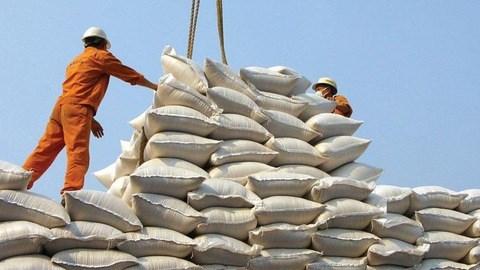 2019年前11月越南大米出口额呈现增长势头 hinh anh 1