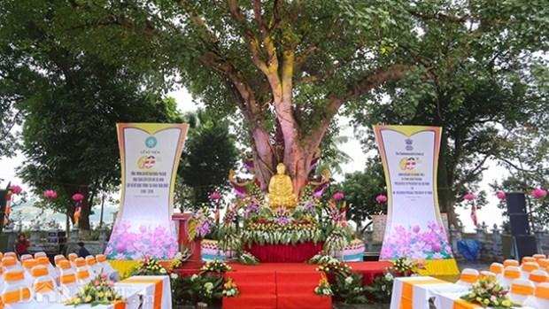 菩提树是印度与越南在文化及文明方面上的悠久联系之象征 hinh anh 1