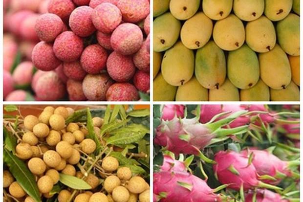 2019年越南水果出口额达38.5亿美元 hinh anh 1