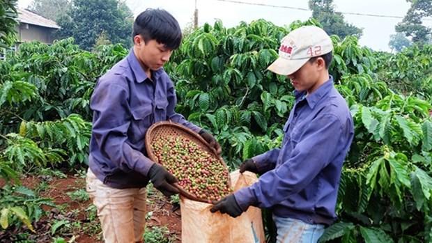 升级越南咖啡品牌 hinh anh 1