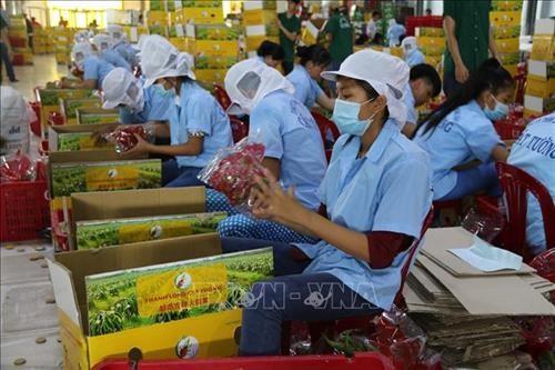 蔬果出口:要在新市场肯定其价值 hinh anh 2