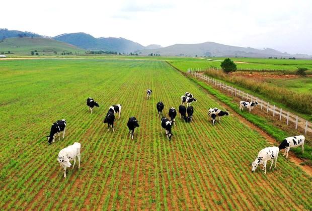 越南养殖业朝着工业化、现代化方向发展 hinh anh 1