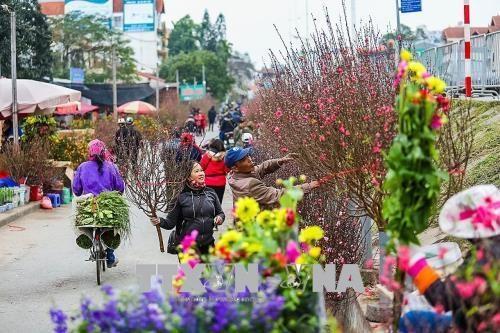 2020年河内迎春花市即将开市 50多个赏花点等你来赏购 hinh anh 1