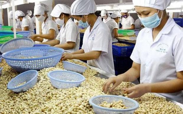 2020年越南腰果出口额力争达到40亿美元 hinh anh 1