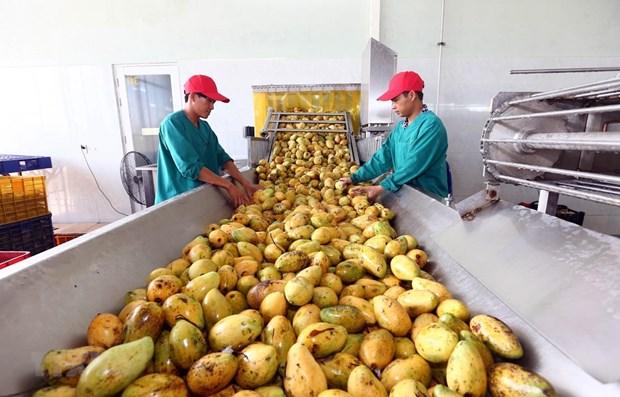"""农业与农村发展部部长阮春强:企业是引领农产品价值链的""""火车头"""" hinh anh 1"""