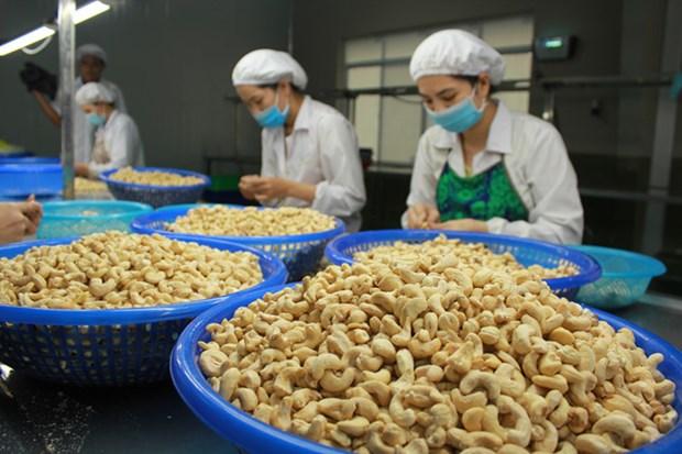 2019年越南腰果果仁出口量和未加工腰果进口量均创下新纪录 hinh anh 2