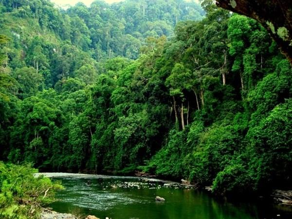 总面积近27万公顷的越南森林荣获国际认证证书 hinh anh 1