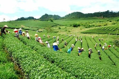 北江省致力于提高文村茶叶品牌的知名度 hinh anh 1