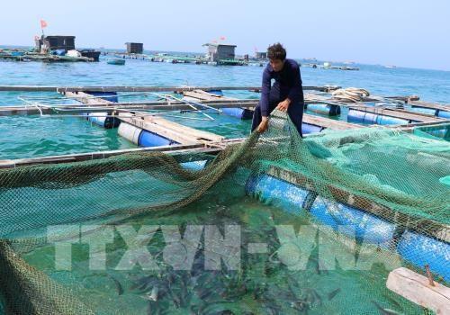 """中部以南——越南各种龙虾""""王国"""" hinh anh 1"""