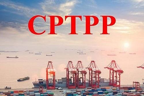 CPTPP生效一年后带来切实利益 hinh anh 1
