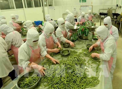 安江省力争至2025年出口总额达到12亿美元的目标 hinh anh 1