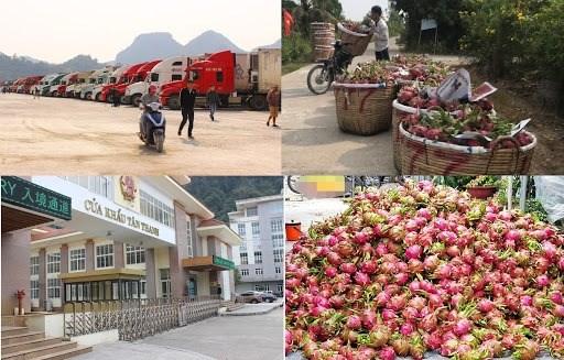 新型冠状病毒感染肺炎疫情:越南农产品销售方案 hinh anh 1