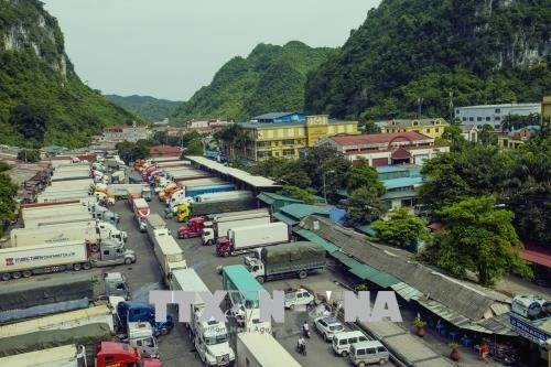 新型冠状病毒感染肺炎疫情:越南寻找促进进出口的措施 hinh anh 1