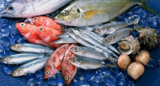 受疫情影响印尼限制从中国进口的活鱼 hinh anh 1