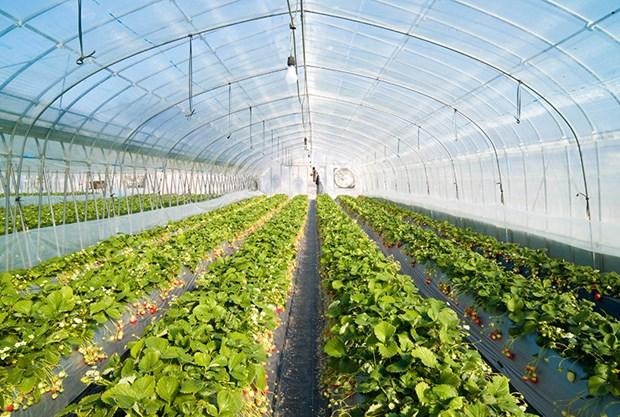 林同省实现农产品市场多样化发展 hinh anh 1