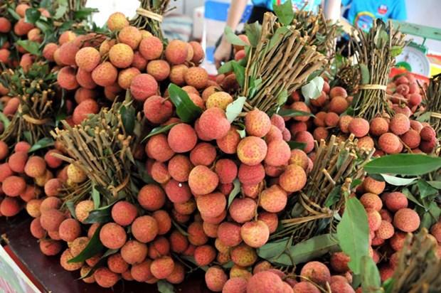 越南为新鲜荔枝产品进入日本市场作出充分准备 hinh anh 1