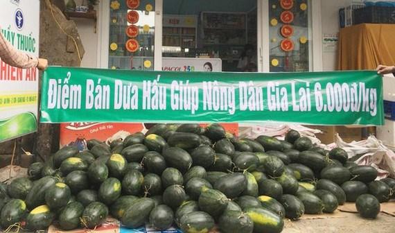韩国携手助力解决越南农产品滞销问题 hinh anh 1