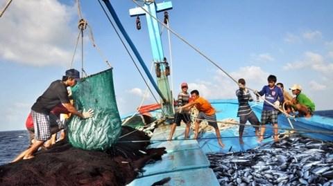 永良渔港的早晨——越南南中部地区批发之渔港 hinh anh 1