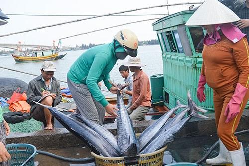 永良渔港的早晨——越南南中部地区批发之渔港 hinh anh 2