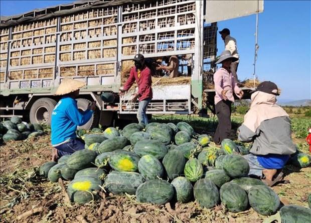 加强农产品生产管理 制定应对疫情有效方案 hinh anh 1