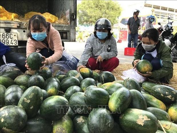 新冠肺炎疫情对越南农产品的影响和对策 努力把挑战变成机遇 hinh anh 1