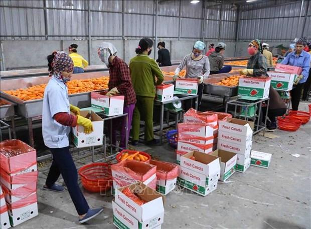 越南新冠肺炎疫情对农产品的影响有多大?
