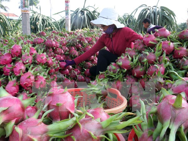2020年1月越南蔬果出口额猛降20.6% hinh anh 1