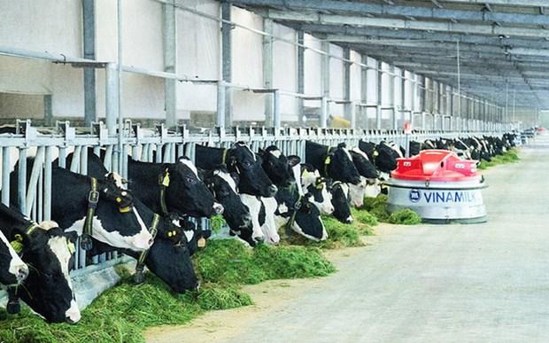 越南一家乳制品生产厂获得对华出口资格 hinh anh 1