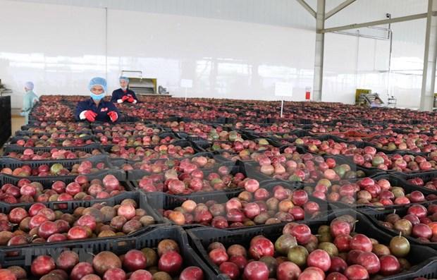 EVFTA——越南蔬果扩大出口市场的绝佳机会 hinh anh 1