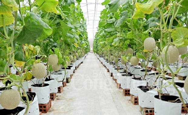 促进越美两国在农产品生产方面的贸易和科技合作 hinh anh 1
