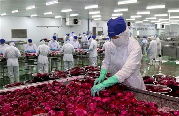 越南努力扩大农产品出口市场 hinh anh 1