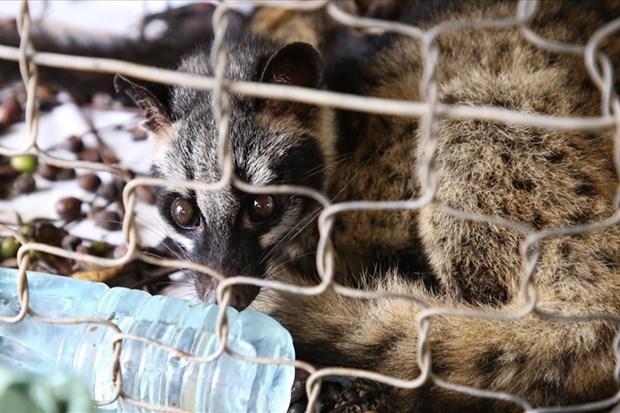 世界自然基金会亚太地区呼吁终止贩卖和销售野生动物 hinh anh 1