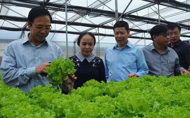 河南省加快完善农产品产销对接模式 hinh anh 1