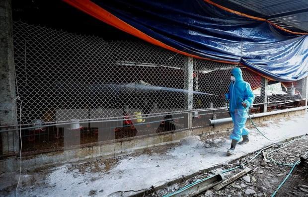 全国11个省市出现禽流感疫情 hinh anh 1