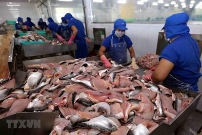 新冠疫情致使越南查鱼对中国出口下降一半 hinh anh 1