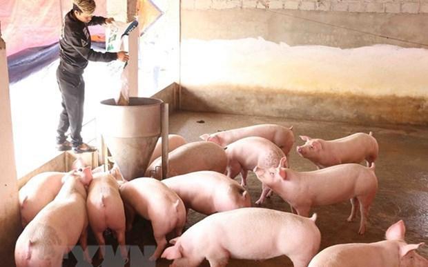 《欧盟-越南自由贸易协定》:越南畜牧业走向何方 ? hinh anh 1