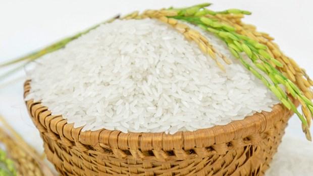 越南对非洲市场出口大米的良机 hinh anh 1
