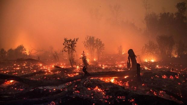 印尼进行人工降雨以扑灭森林火灾 hinh anh 1