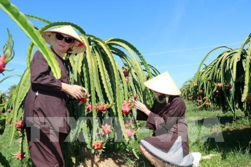 越南政府总理批准至2050年平顺省规划 hinh anh 1